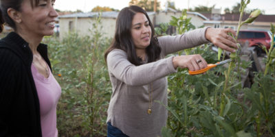 Cousins Angie Rodriguez and Maria Gamboa harvest vegetables from Maria's backyard garden.