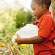 A young Black boy watering flowers outside in the school garden in New Orleans.