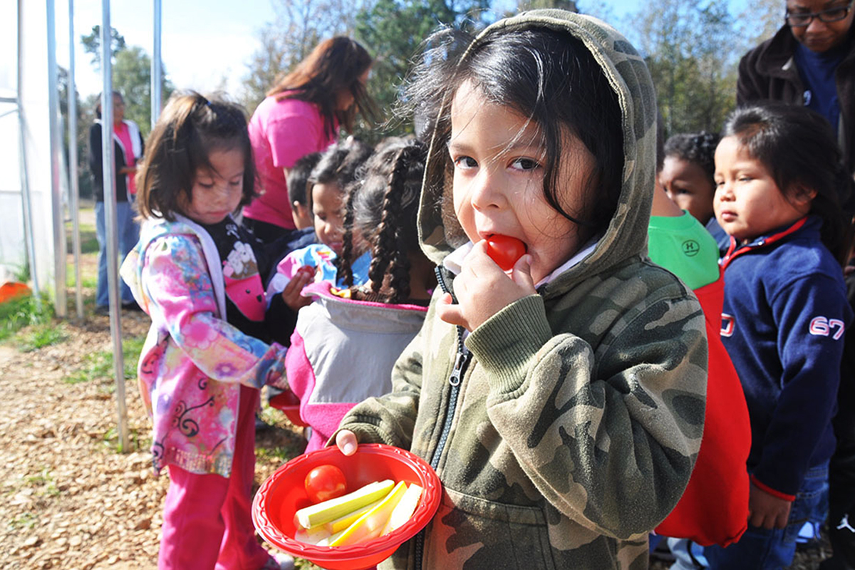 A Choctaw boy enjoys a tomato, fresh off the vine, during a school visit to the Choctaw Fresh hoop houses. Photo: Charlie Goldblat.
