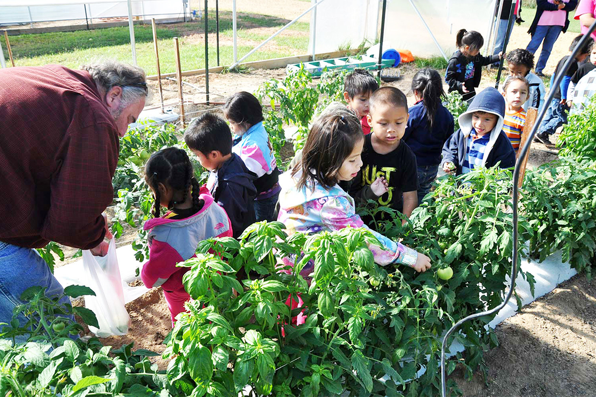 Elementary-age students learn about agriculture and healthy food during a school visit, where they pick tomatoes and enjoy a nutritious snack. Photo credit: Charlie Goldblat.