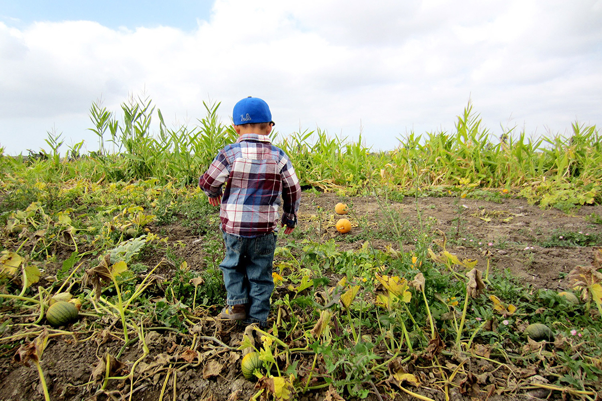A young boy wanders the pumpkin patch at McGrath Family Farm, one of the many farms that LAFPC works with to ensure the best practices are in place. Photo: Haan-Fawn Chau.