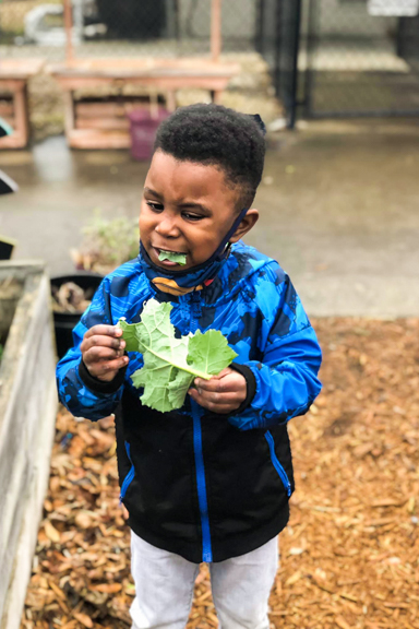 A young boy tries a bite of a lettuce leaf, fresh from the garden bed. Photo courtesy of Little Ones Learning Center in Forest Park, GA.